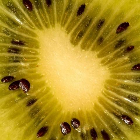 Makrofotografie - Kleine Welt ganz Groß - Canon Academy Grundlagen