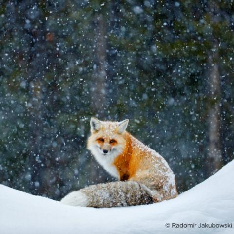 Entdecke die Farben des Winters