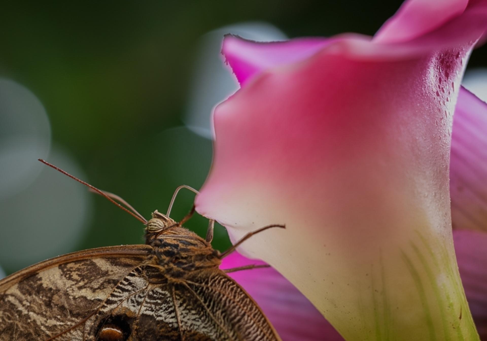 Makrofotografie im Palmenhaus/Schmetterlingshaus - Canon Academy Natur-, Tier- und Makro