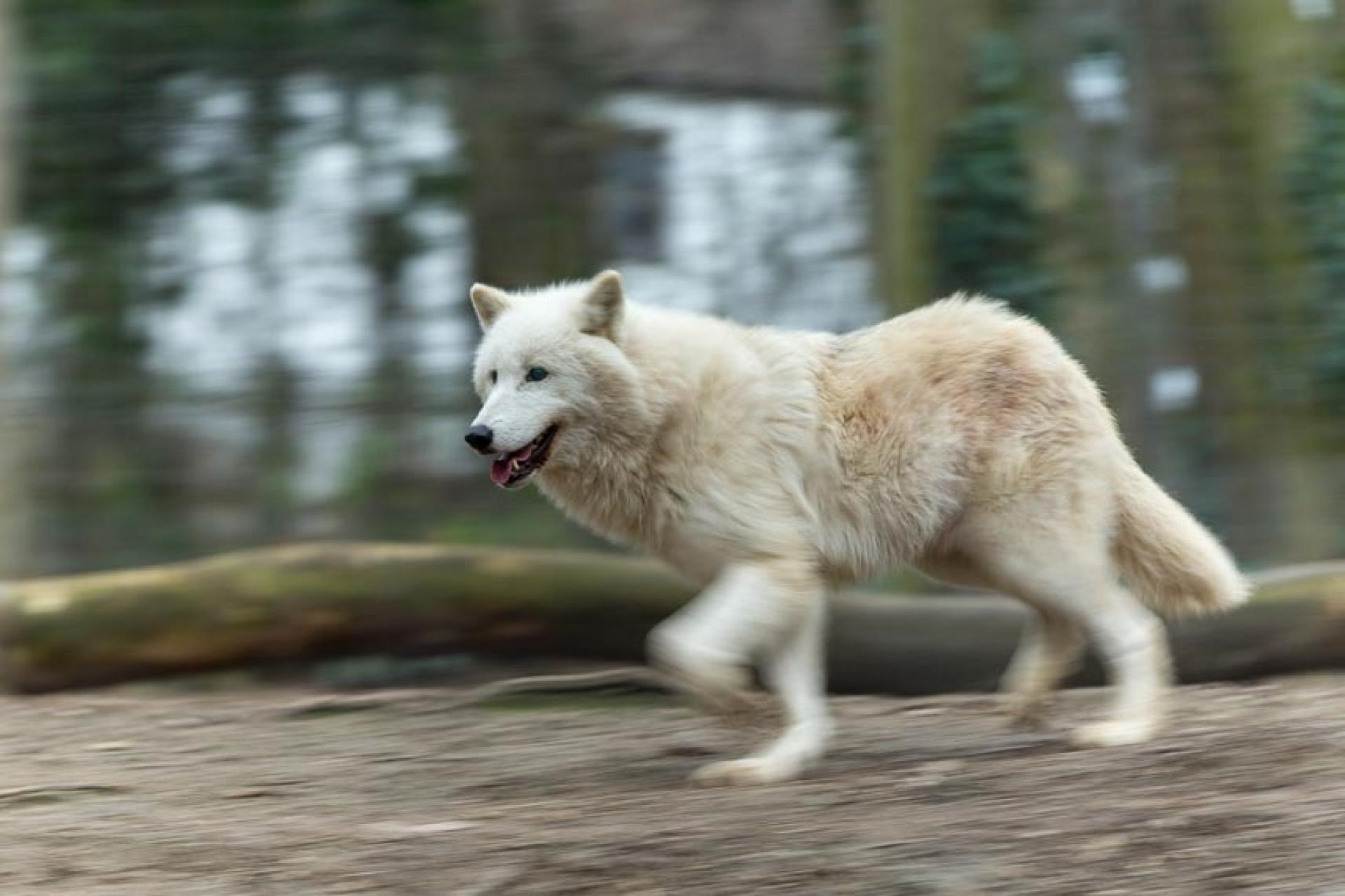 Tierfotografie in Theorie und Praxis - Canon Academy Natur-, Tier- und Makro